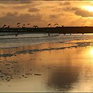 Sunset - Beadnell Bay - Northumberland by Diane Thornton