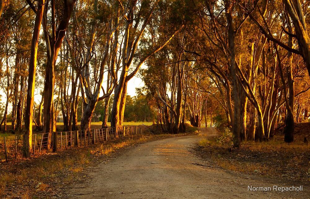River Road by Norman Repacholi