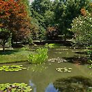 Sitting in A Japanese Garden by Scott Mitchell
