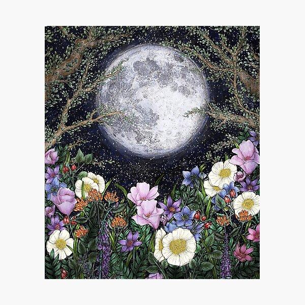 Midnight in the Garden II Photographic Print