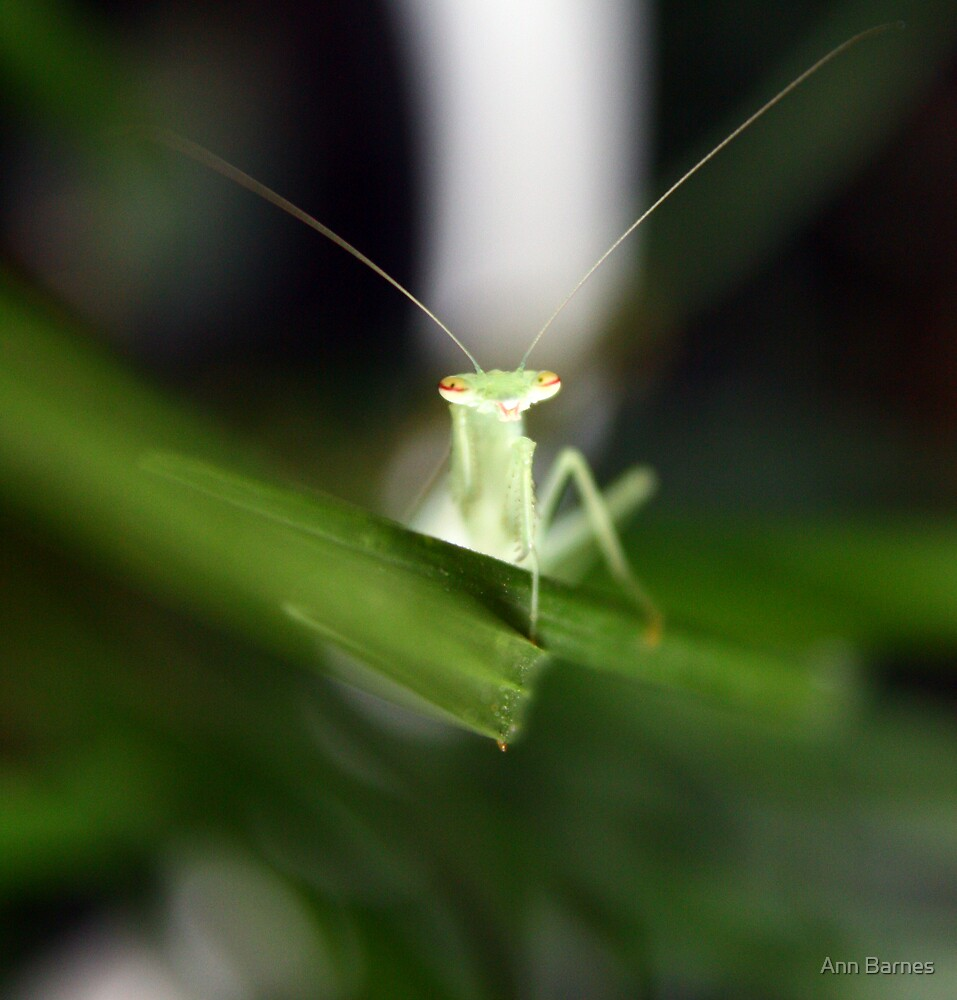 Praymantis by Ann Barnes
