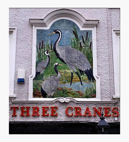 Pub Sign The Three Cranes Photographic Print