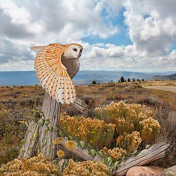 Barn Owl by Skyviper
