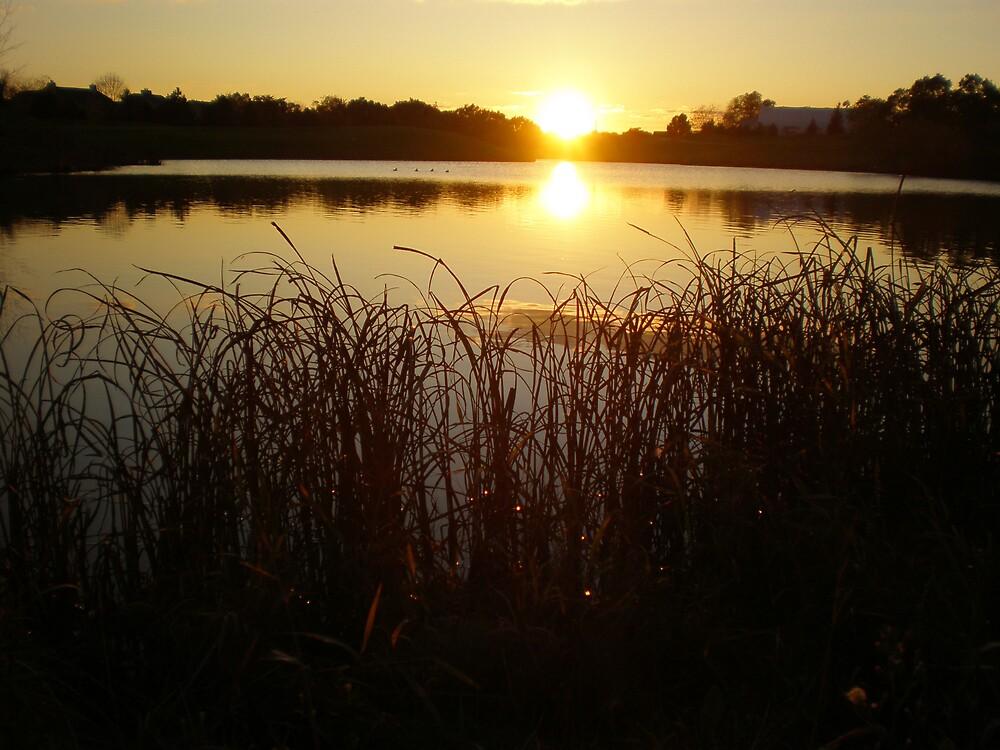 sunset by swimchk512