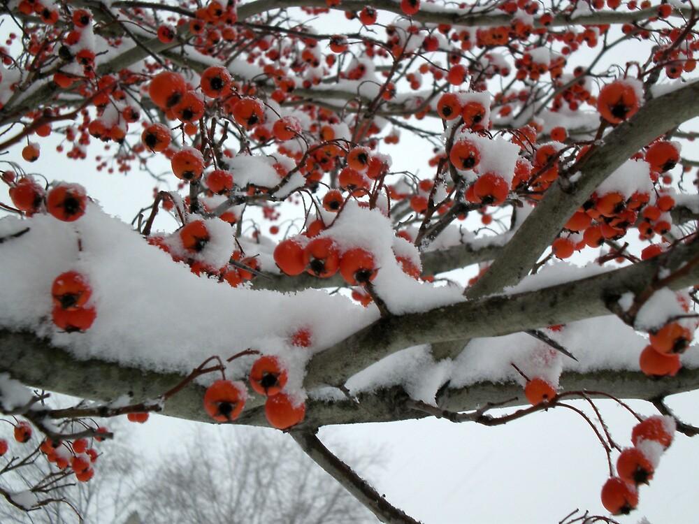more cherries by swimchk512