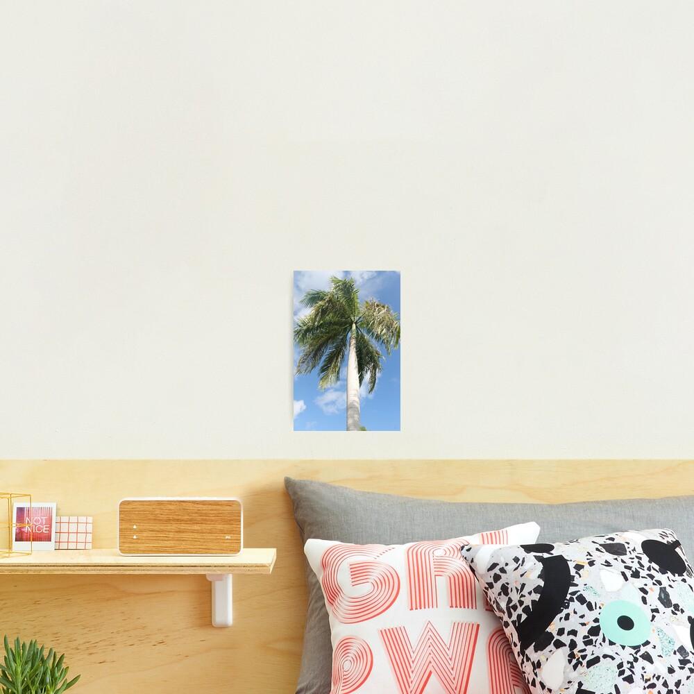 Big palm Photographic Print