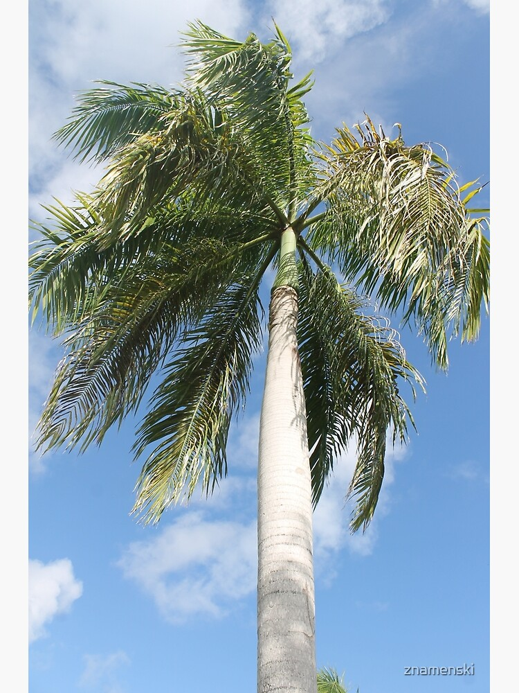 Big palm by znamenski
