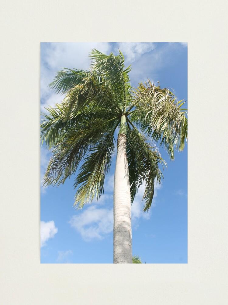 Alternate view of Big palm Photographic Print