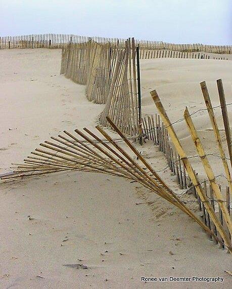 Wind Blown by Ronee van Deemter