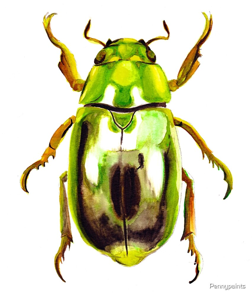 Green Beetle  by Pennypaints