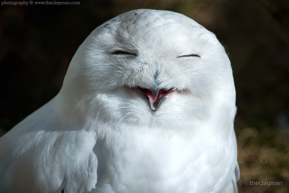 Smiling Snow Owl by theclayman