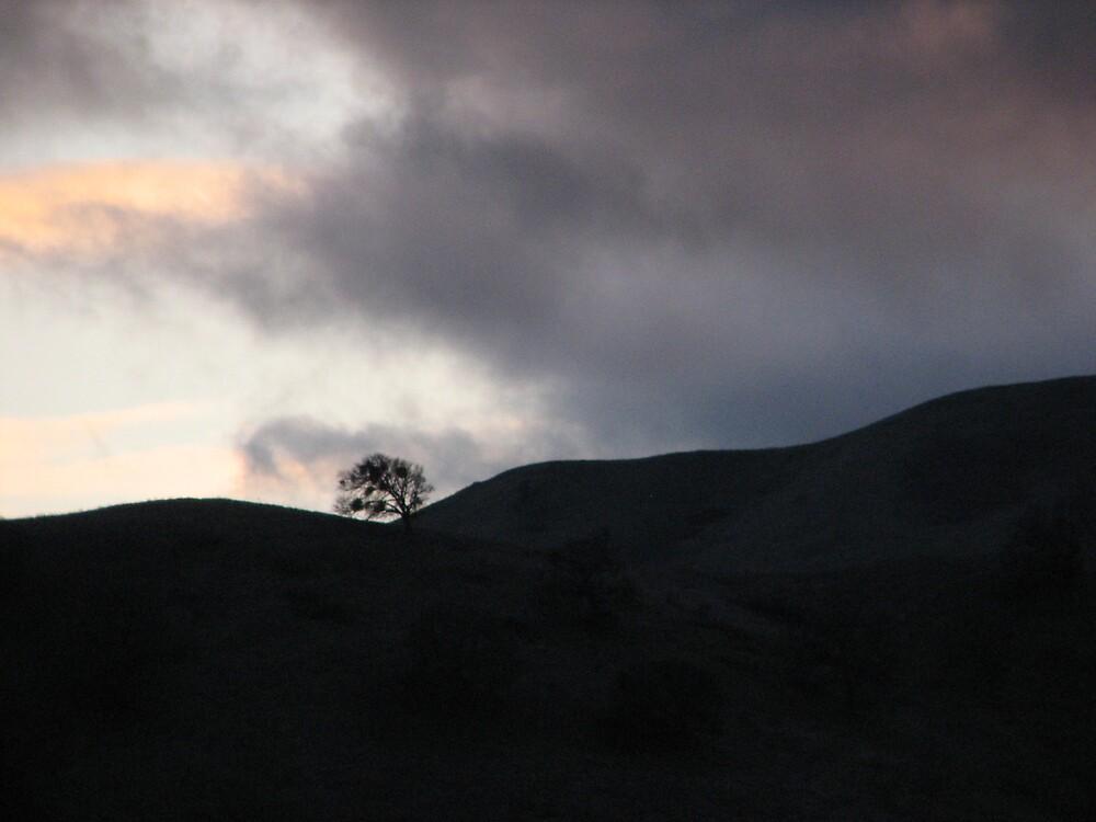 Oak on Ridge. by stonehorse