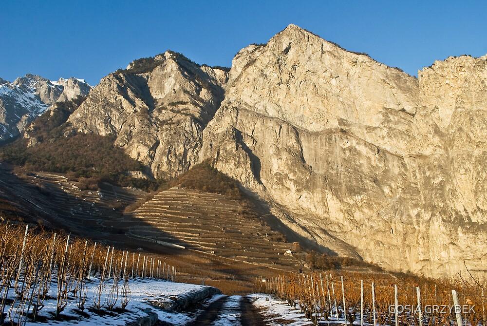 vineyards in the Alps- Swiss by GOSIA GRZYBEK