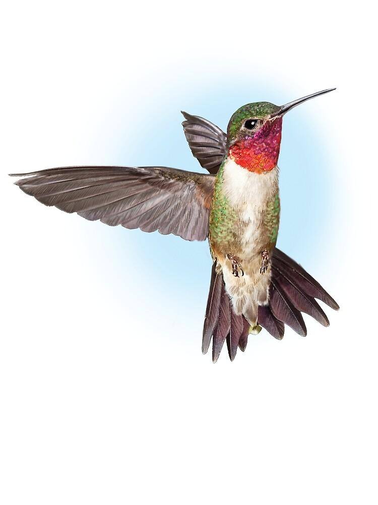 Hummingbird in Flight by Getusom32