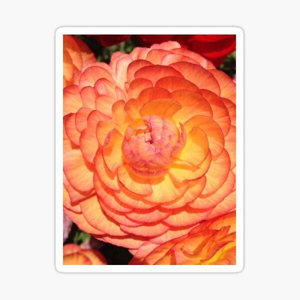 Vibrant Full Blooming Rose Sticker