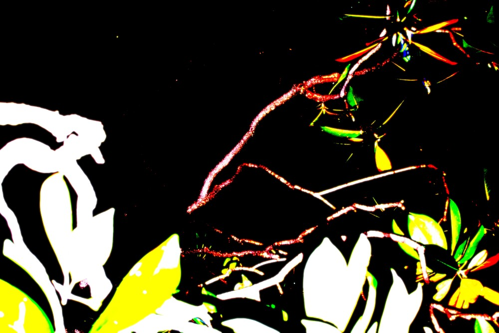 Magnolia by Marie Monroe
