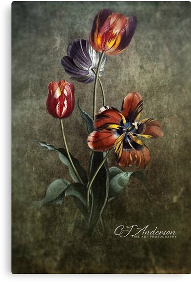 Natures Palette A Priceless Work Of Art by CJ Anderson