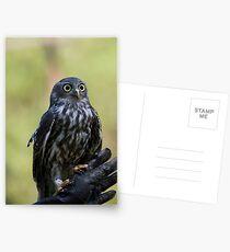 Owl Eyes Postcards