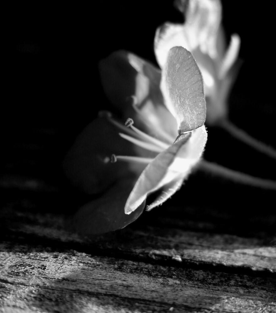 Black and White Flower by Jennifer Suttle