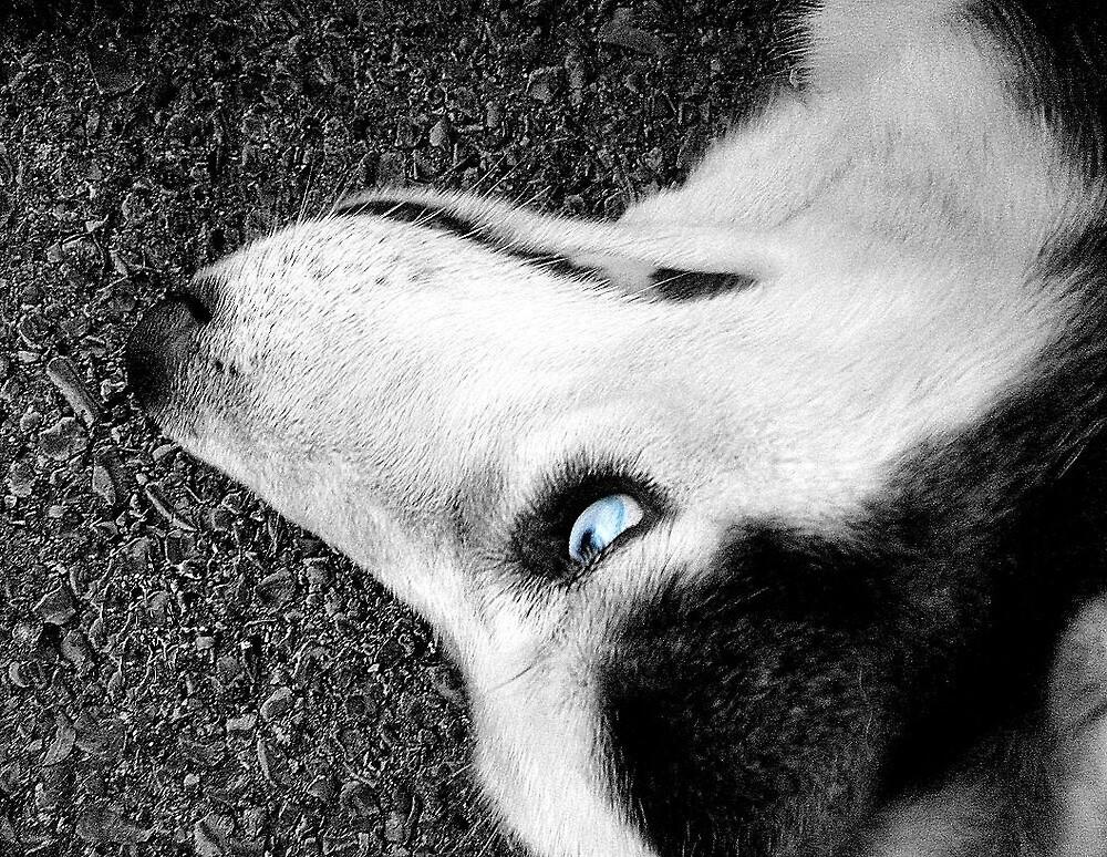 Husky by Jennifer Suttle