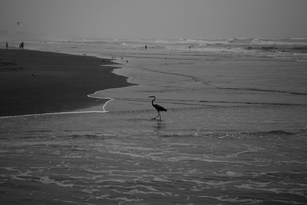 Heron  by Jennifer Suttle