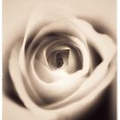 Dreamy Vintage Rose by Nathan Little