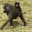 Baboon & baby - Tanzania Africa by Bev Pascoe
