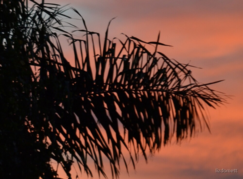 Palm against the setting sun by lizdomett
