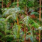 Deep In The Forest, Tamborine Mountain by Dave Catley