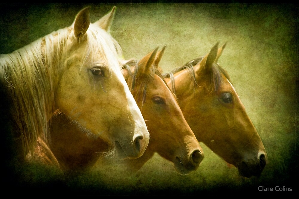 Brumbies Three by colinsart