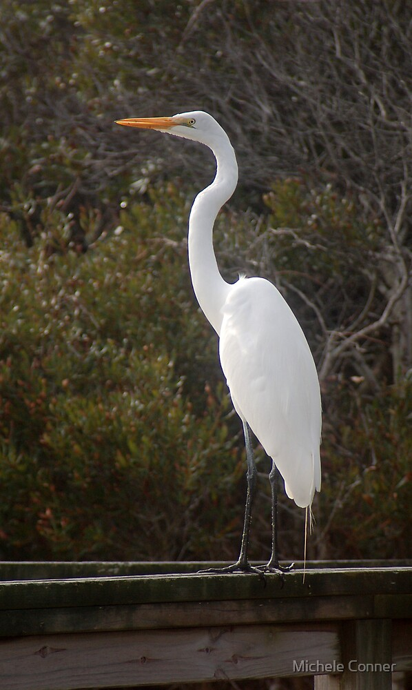 Egret at the Outer Banks by Michele Conner