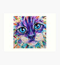 Katzen in Farbe 1 - Ragdoll Katze Kunstdruck