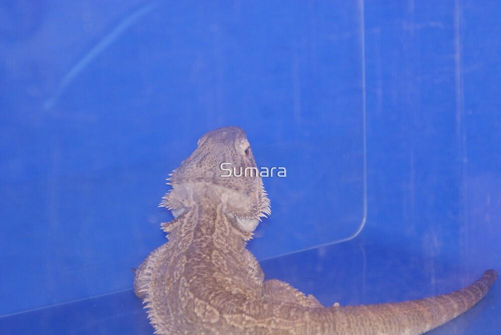 bearded dragon by Sumara