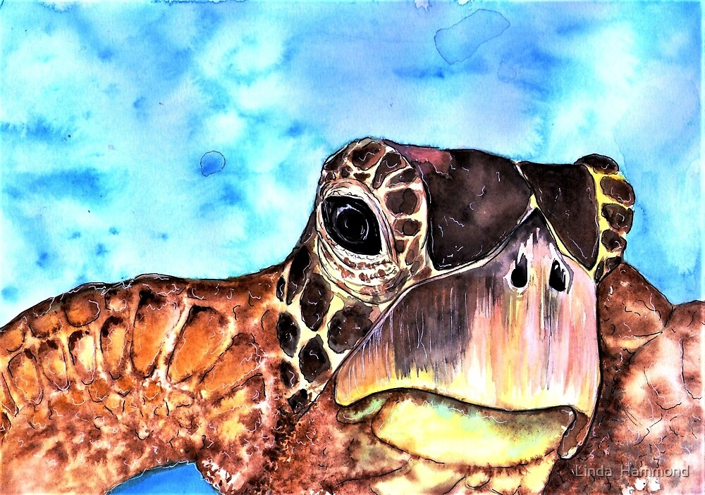Seaturtle by Linda  Hammond