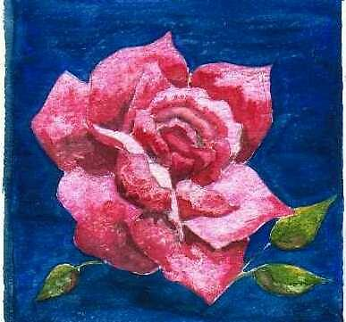 Rose by JacquiK