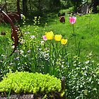 Tulips Always Make a Bright Spot in Any Garden by Dennis Melling