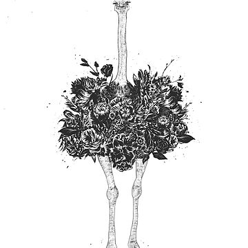 Floral ostrich  by soltib