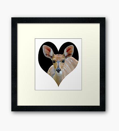 Bushbuck portrait 4 Framed Print
