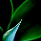 Agave by Janine  Hewlett