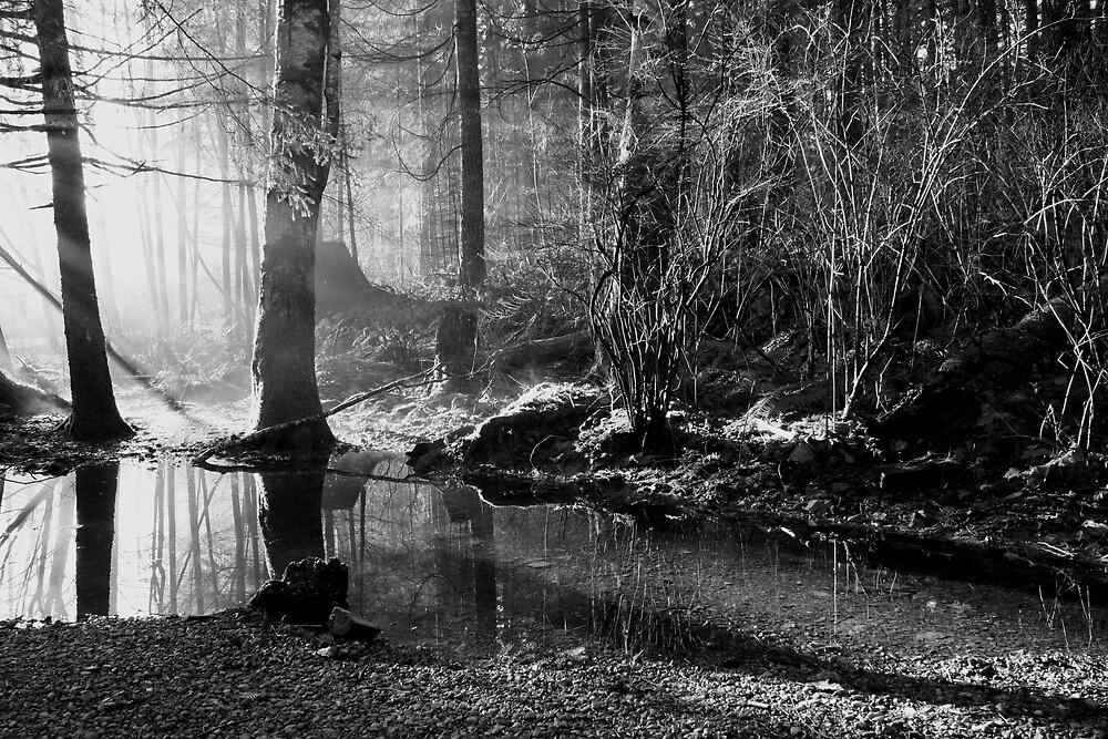 Forest Fog  by Stephanie Ogg