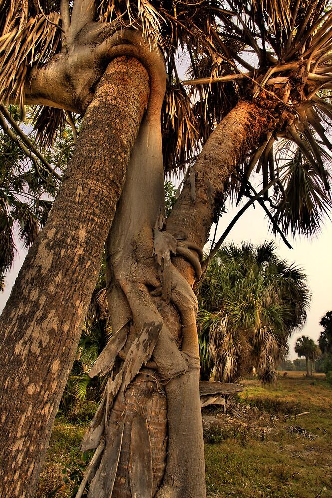 Strangler Fig on Palms by sailorsedge