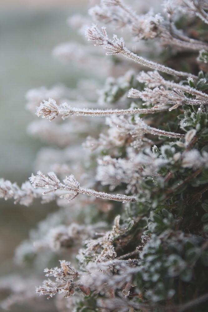 Frosty Thyme by Stephanie Ogg