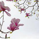 In Pink by Olga Zvereva