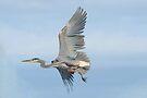 In Flight by Betsy  Seeton
