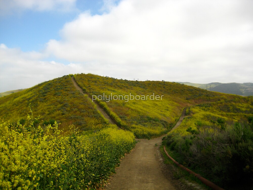 Two Trails Diverge in a Yellow Field by polylongboarder