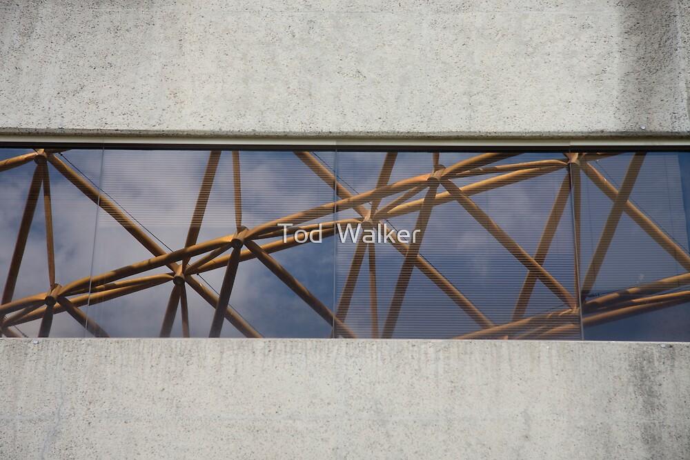 the window by Tod  Walker
