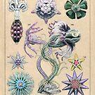 Echinoderms Plate by Djjacksonart