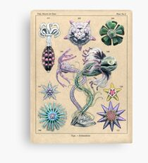Echinoderms Plate Canvas Print
