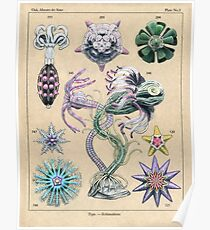 Echinoderms Plate Poster
