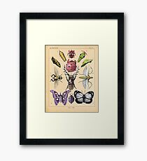 Bug Plate Framed Print